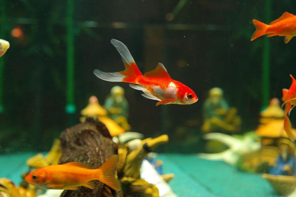 Jak zaaranżować efektowne akwarium?