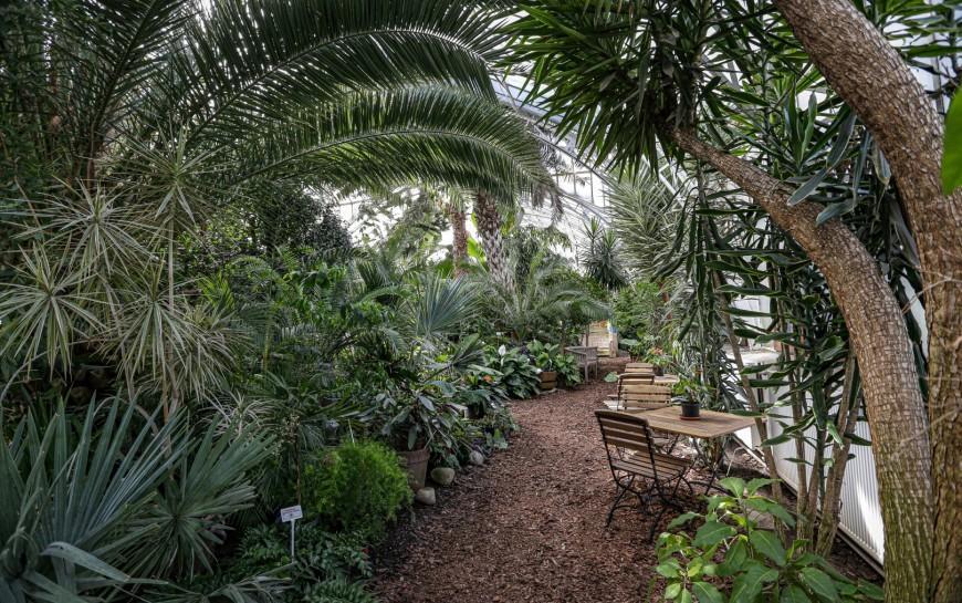 Miasto wybrało firmę, która przywróci palmiarni blask
