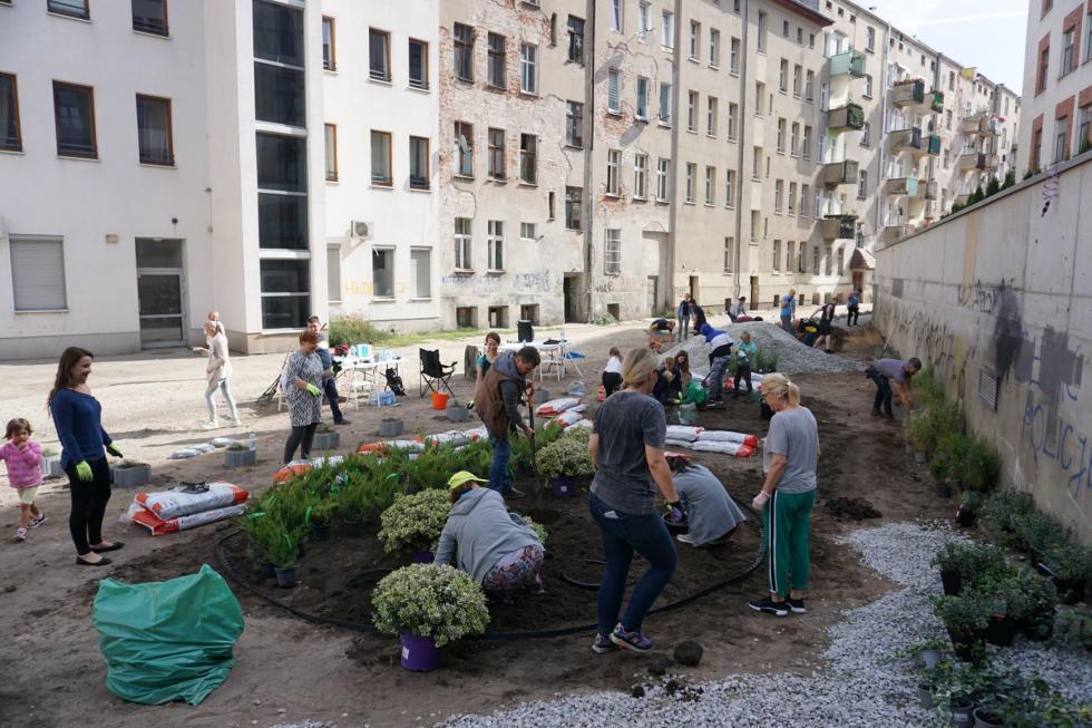 Zielony trójkąt zeko-muralem? Mieszkańcy Przedmieścia Oławskiego odmieniają swoje podwórko